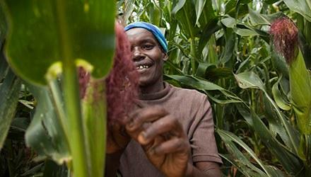 Mit effizientem Maisanbau den Hunger bekämpfen